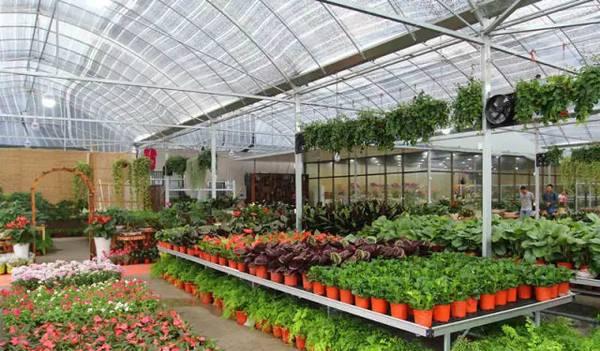 江苏常州武农花卉植物租赁有限公司