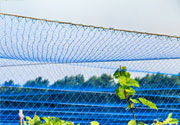 苹果园防鸟网