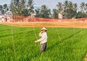 水稻防鸟网