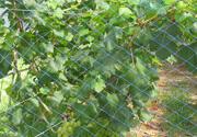 葡萄防鸟网