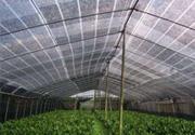 花卉园林遮阳网
