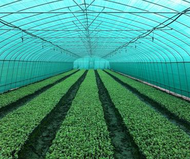 温室农用遮阳网