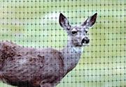 BOP黑色防鹿围栏网
