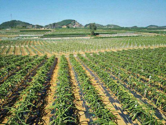 蔬菜地防草布