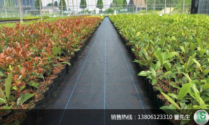 苗床基层保护园艺地布