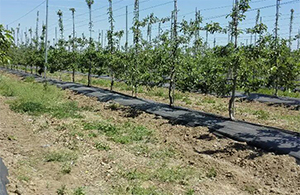 苹果园用防草布园艺地布