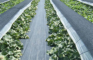 庭院蔬菜用防草布