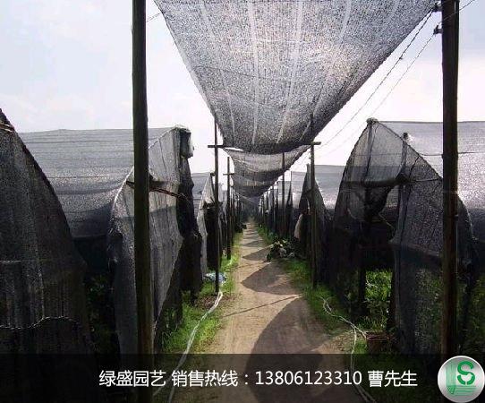 蔬菜大棚专用防虫害遮阳网厂家