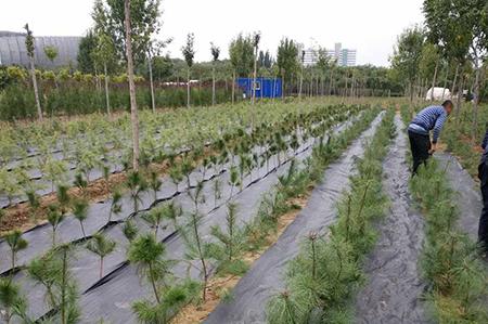 防草布 园艺地布
