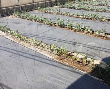 蔬菜防草布